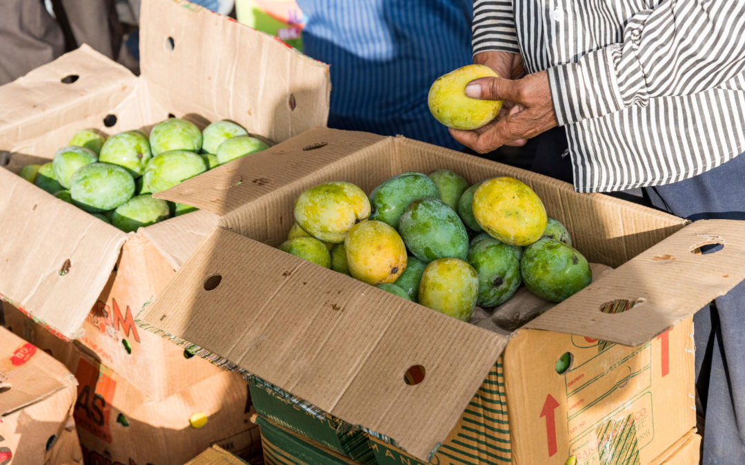 Mango: The fruit that holds an entire nation in summer's sway